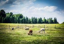 Łąka - Agroturystka